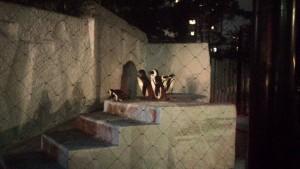 動物園19