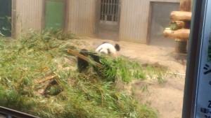 動物園21