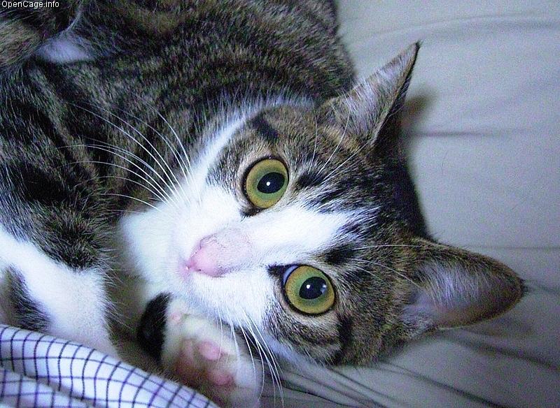 猫 アイキャッチ