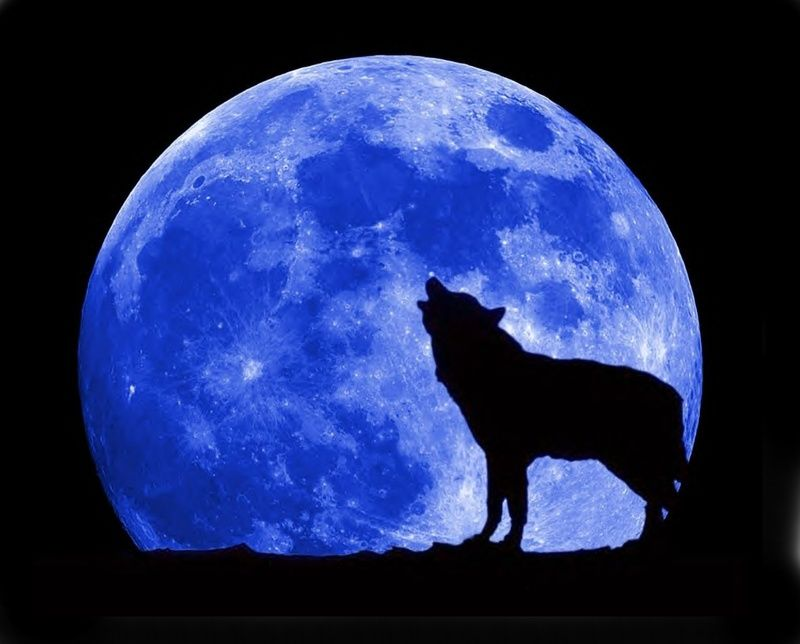 月夜に吠えるオオカミ