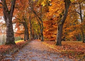 autumn-548886_640