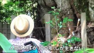 水木しげるさんと御神木 (3)
