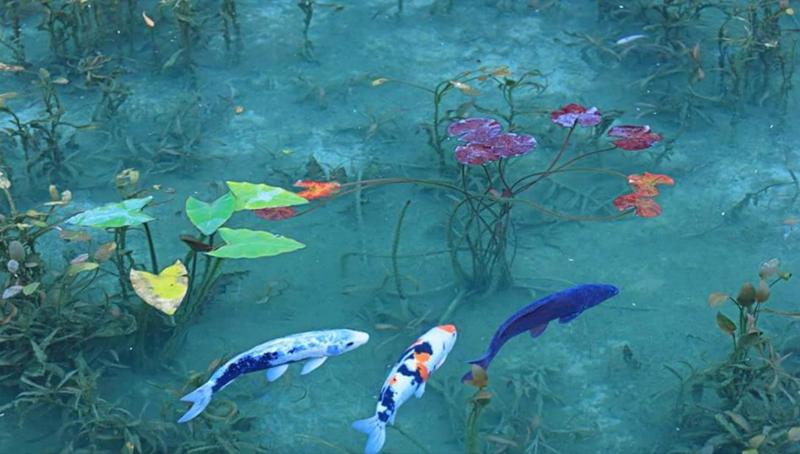 モネの池4