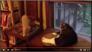 【おもしろねこ動画まとめ】ドジな猫まとめ【爆笑かわいい猫】