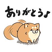 ボンレス犬とゆるくて楽しい会話しよ!01