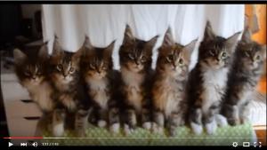 可愛いおもしろ猫や仔猫10連発! ~最高にかわいい猫ちゃんたち~