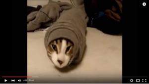 世界の可愛いおバカ猫ムービー