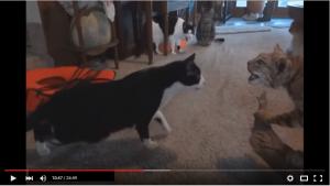 最高におもしろ可愛い猫ちゃん動画集!笑いと動物の癒しをお届け