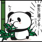 お買いものパンダ4コマ表紙