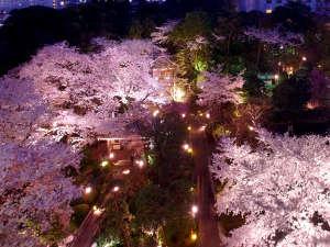高輪 桜まつり