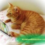 オススメ猫iPhoneケース