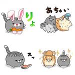 アモーレ♡ボンレス犬&ボンレス猫