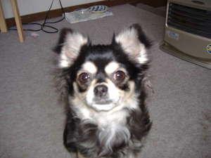 ツペット犬