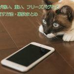iphonecat